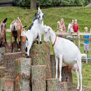 Half Term in the Farmyard & Adventure Playground
