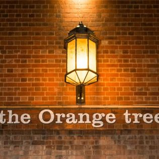 10. the Orange tree
