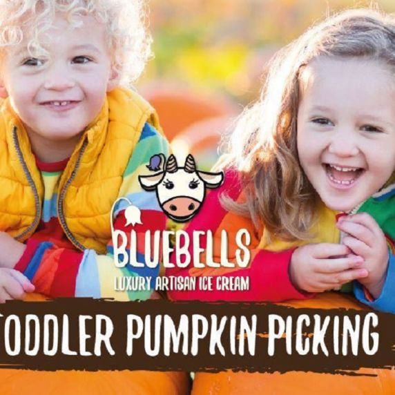 Toddler Pumpkin Picking