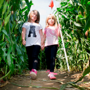Moon Landing Maize Maze - 13 Jul - 2 Sep