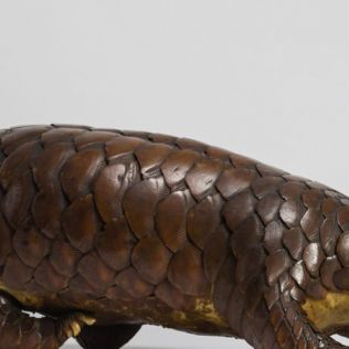 Nature in Focus: World Pangolin Day - 18 Feb