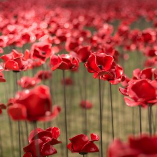 Derby Remembrance Memorial Online - 8 & 11 Nov